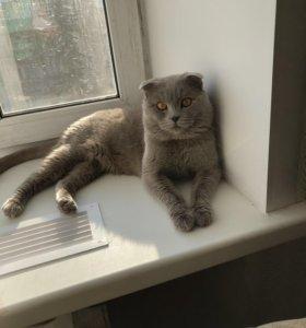 Опытный джентельмен  ждёт в гости котеечек