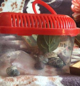 Переноска для черепах(маленьких)
