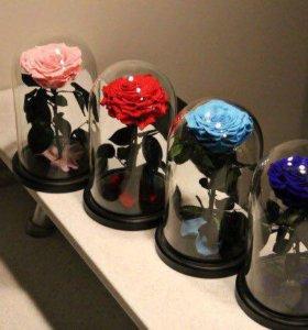 Розы в колбе. Подарок любимым.