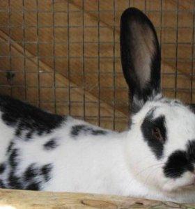 Кролики разных пород! Недорого!