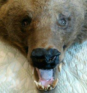 Медведь шикарная шкура
