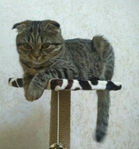 Ищем котика на вязку