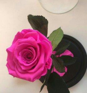 Роза в колбе🌹🌹🌹