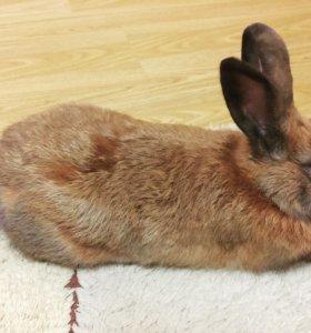 Вязка кроликов