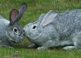 Продаётся свежее мясо кролика