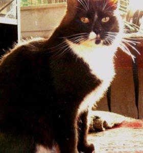 Ласковый котик из приюта.