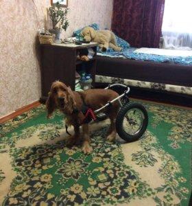 Инвалидная коляска для собак M класс A