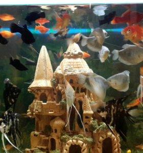 Аквариумные рыбки в ассортименте