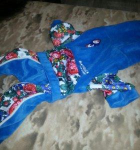 Одежда для декоративной собаки