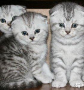 котятки в подарок