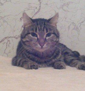 Кот в добрые руки, очень ласковый и нежный.