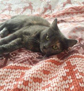кошка Соня в добрые руки
