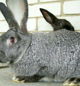 Крольчиха, рассмотрю обмен