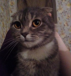 Кошка (принцесса)