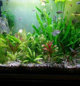 Растения для вашего аквариума.