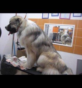 Одежда для собак и кошек в Селятино