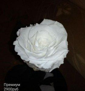 Роза живая в колбе