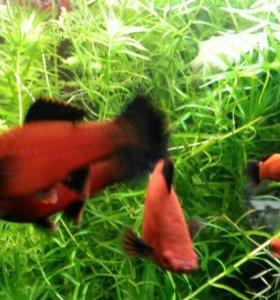 Аквариумные рыбки,растения,креветки,корма
