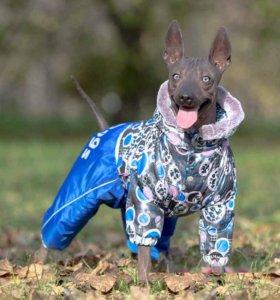 Комбинезон для собак демисезонный formydogs