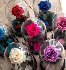 Розы в колбе🥀в наличии