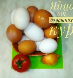 Яйцо от домашних кур