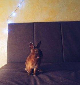 Декоративный кролик с клеткой 🐰