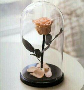 Роза в колбе Кремовая
