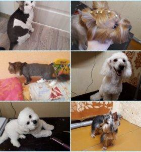 Стрижки кошек и собак