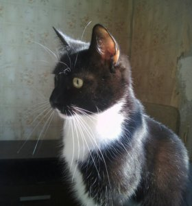 Том, брутальный кот в дар