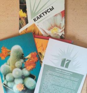 "Набор открыток ""Кактусы"""