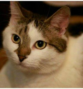 Чудо кошка Вахмурка в дар в добрые руки