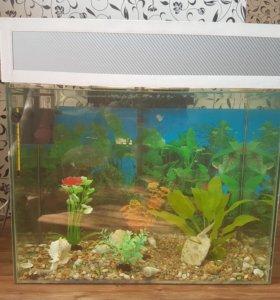 Продам аквариум 100 литров с крышкой