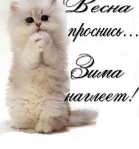 Возму любово котенка