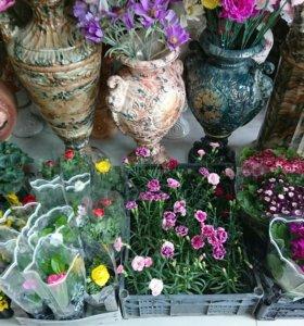 Цветы комнатные и садовые