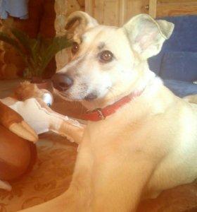 Пропала собака, Малоярославец