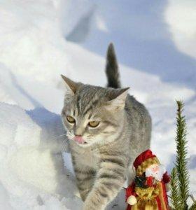 Котик метис от породистых родителей.