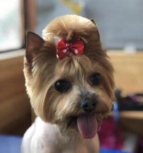 Стрижка собак на дому у мастера