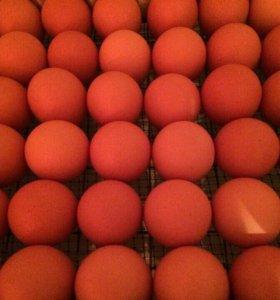 инкубационное яйцо Ломан Браун