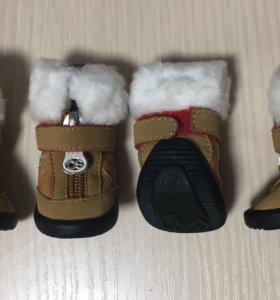 Ботиночки для собак мелких пород