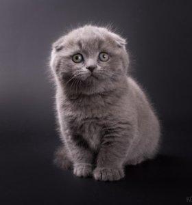 Премиум-котята от Чемпиона Мира