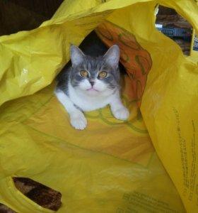 Кошечка Ася 4 года