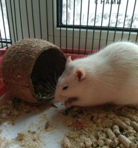 Домик для грызунов (кокос)