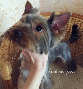 Стрижка собак ( грумер)