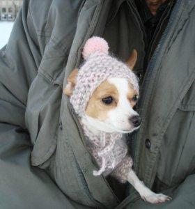 шапочки для собак