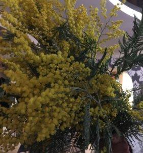 Цветок мимоза 🌼💐