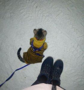 Одежда и шлейка для животных