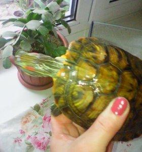 Черепаха с большим аквариумом