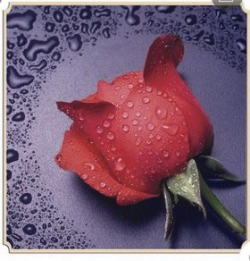 Алмазная вышивка мозаика Роза
