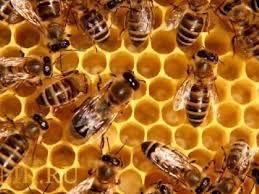 Продаются пчелосемья