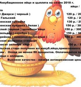 Цыплята и инкуб.яйцо породной птицы.